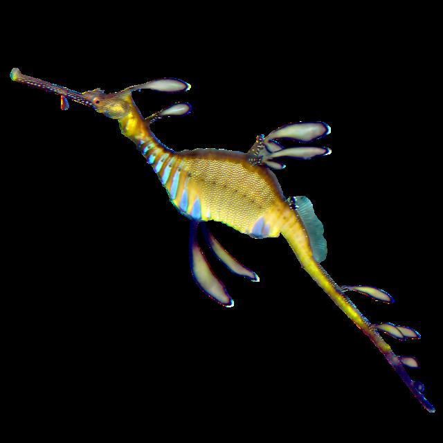 Løvpjaltefisk