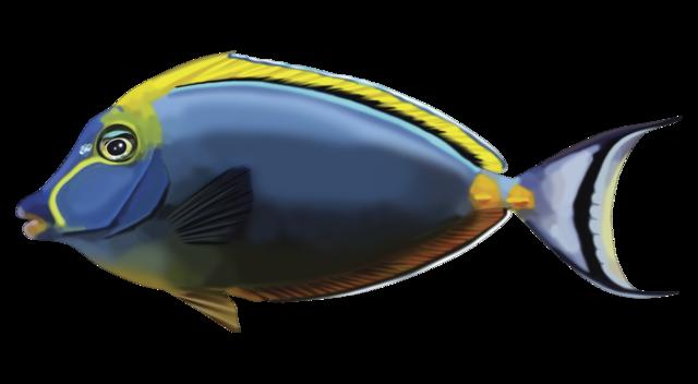 Elegant unicornfish