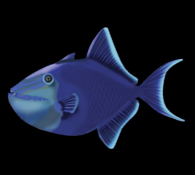 Blå aftrækkerfisk