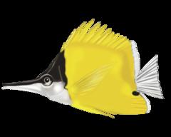 Näbbfisk