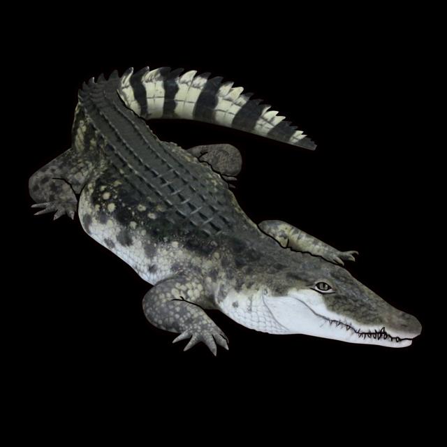 Filippinska krokodil