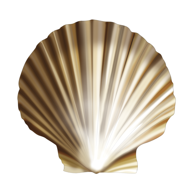 Queen scallop
